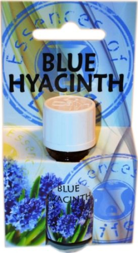 BLUE HYACINTH OP